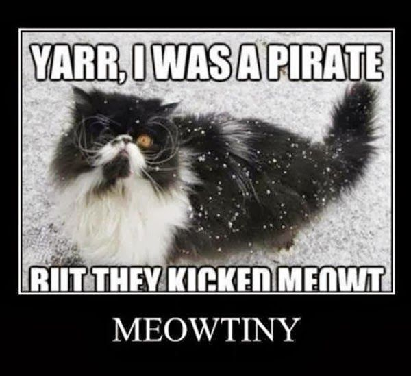 yarr i was a pirate but they kicked meowt